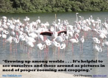 pink flamingoes, standing out, crowds, taking flight